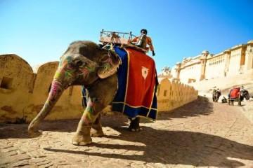 1415789890_Amber_Fort_Jaipur